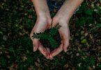 Ecolabels lead image - femme tenant une plante dans la forêt